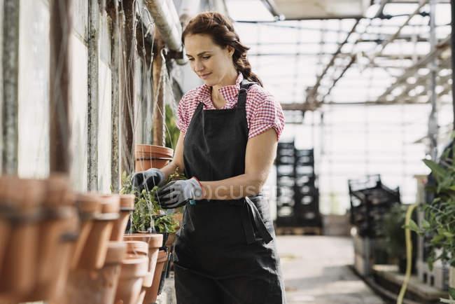 Mulher que verific as folhas que crescem na planta potted na estufa — Fotografia de Stock