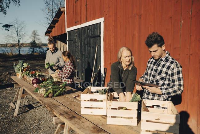 Agricoltori maschi e femmine che organizzano verdure biologiche in cassette fuori stalla — Foto stock
