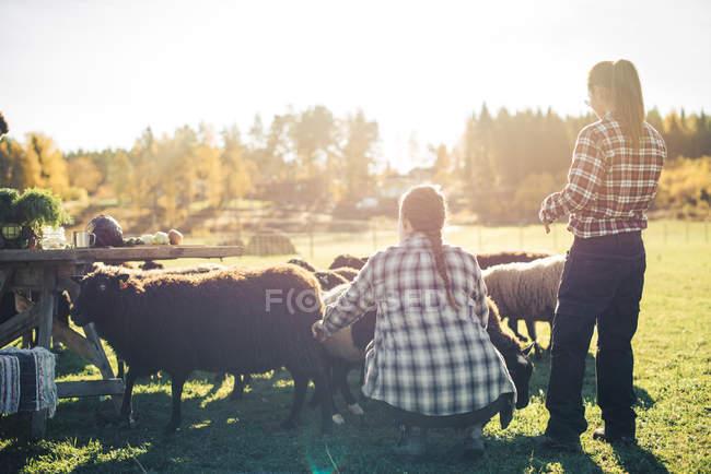 Agricultoras multiétnicas com rebanho de ovelhas no campo — Fotografia de Stock