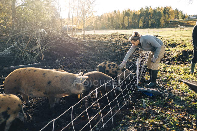 Full length of farmer petting pig in animal pen at organic farm — Stock Photo
