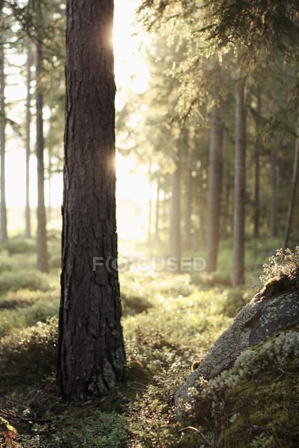 Bäume und Rasen im Wald an sonnigen Tag — Stockfoto