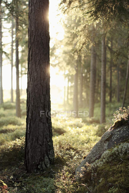 Trees and grass in forest during sunny day — Stock Photo