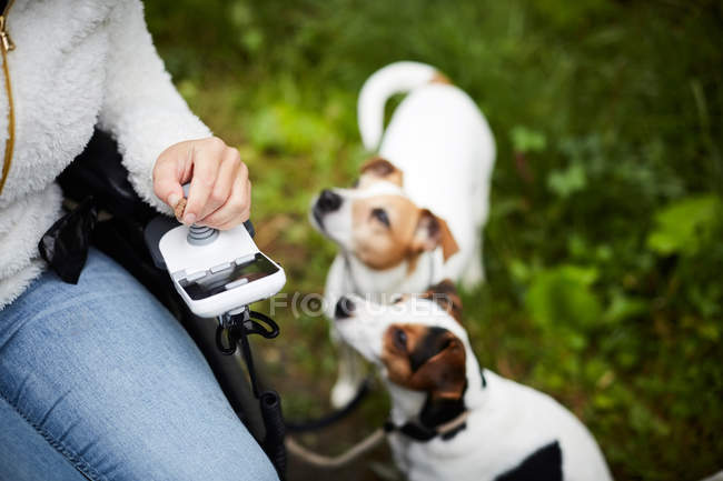Cropped image of disabled woman in wheelchair with dogs outdoors — стоковое фото