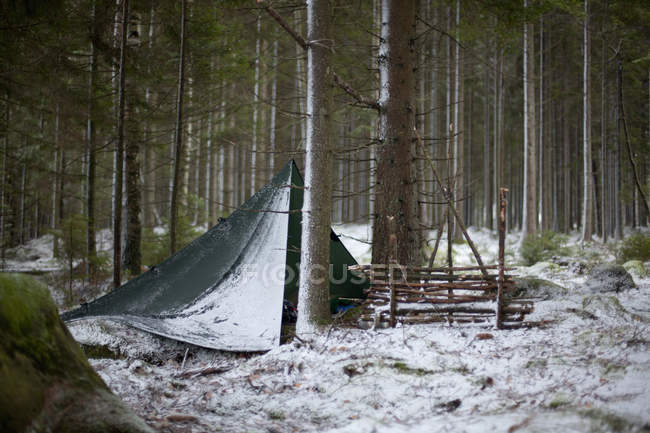 Tent between tree trunks in woodland during winter — Stock Photo
