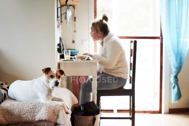 Dog sitting on sofa with disabled woman using laptop in background at home — стоковое фото