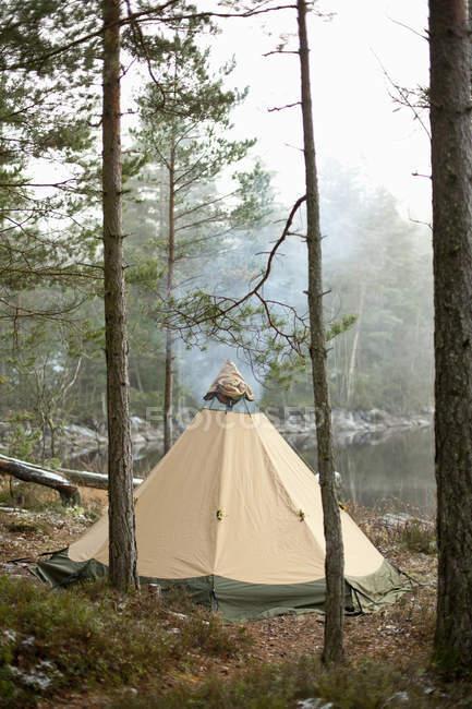 Zelt im Wald am Seeufer — Stockfoto