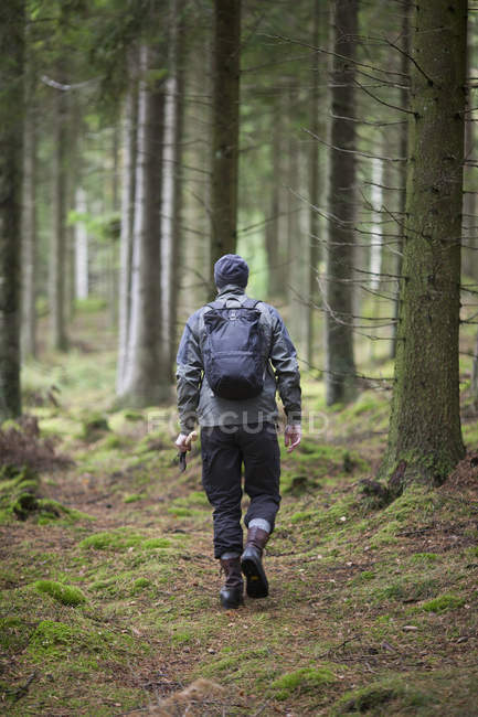 Rear view of hiker walking in forest — Stock Photo