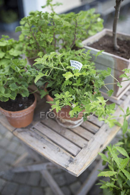 High angle view of potted plants on wooden table — Stock Photo