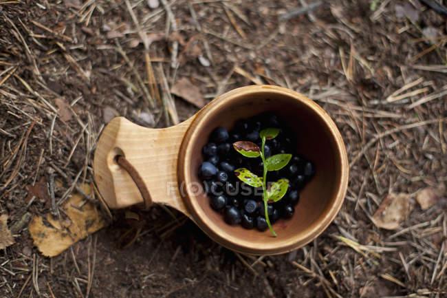 Directamente sobre la vista de arándanos y hojas de madera - foto de stock
