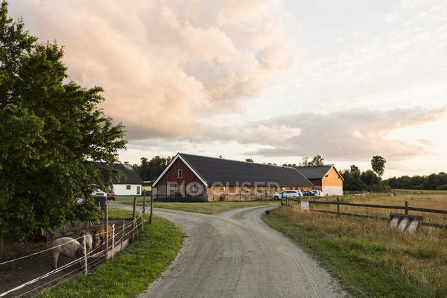 Road leading towards barn against sky at farm — Stock Photo