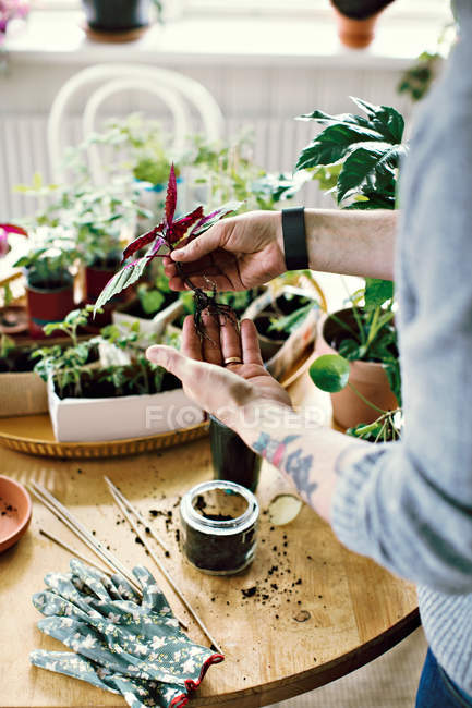 Midsection of male environmentalist planting seedling in jar at table in room — Stock Photo
