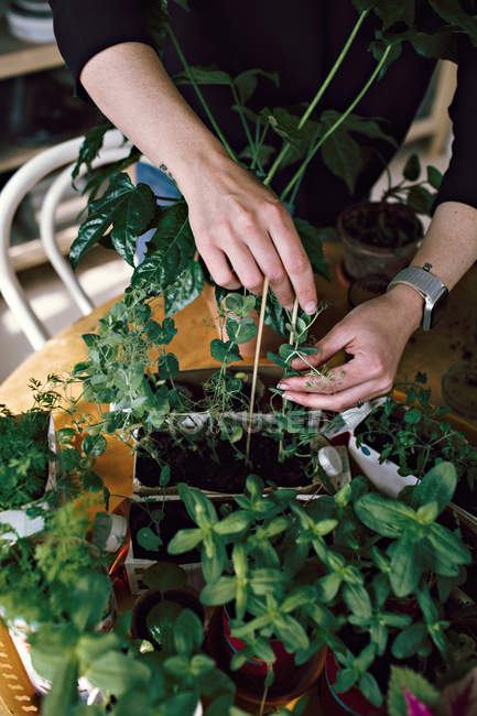 Midsection of woman gardening on table at home — Stock Photo