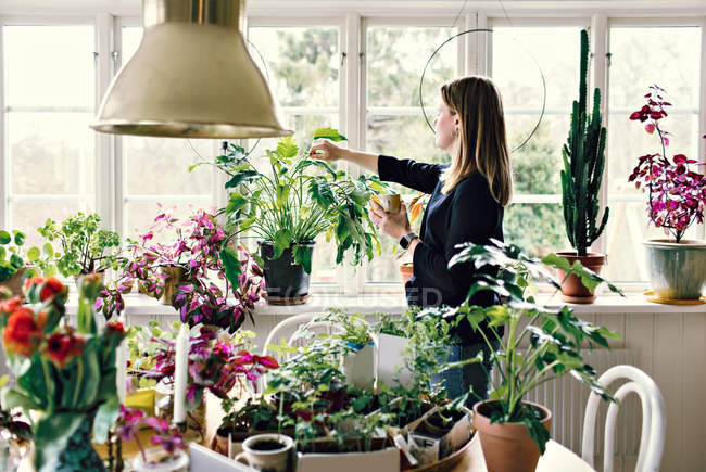 Side view of woman looking at potted plant on window sill — Stock Photo