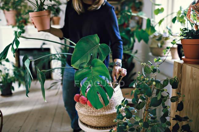Мидсекция женщины, держащей растение в горшке, стоящее в комнате дома — стоковое фото