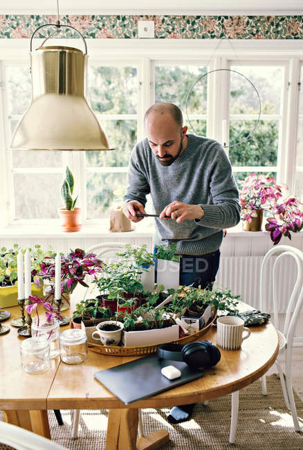 Man photographing plants on table in room against window at home — Stock Photo