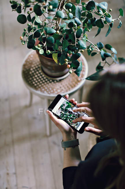 High angle view of woman using smart phone by potted plant at home — Stock Photo