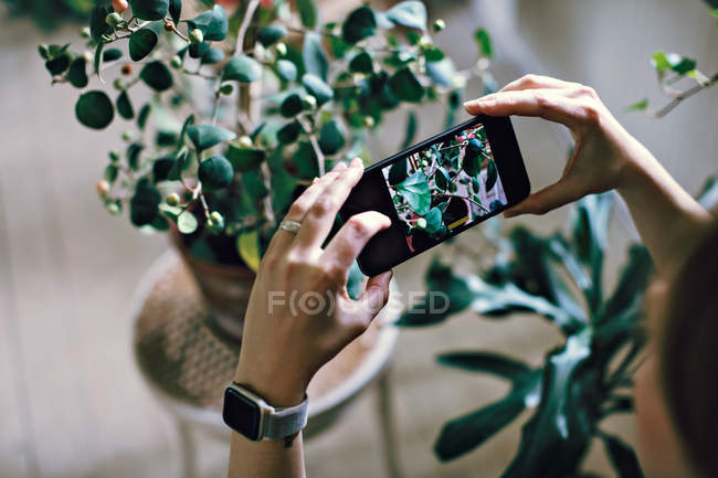Cropped image of woman photographing potted plant at home — Stock Photo