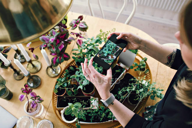 Высокий угол зрения женщины фотографирования растений на столе в домашних условиях — стоковое фото