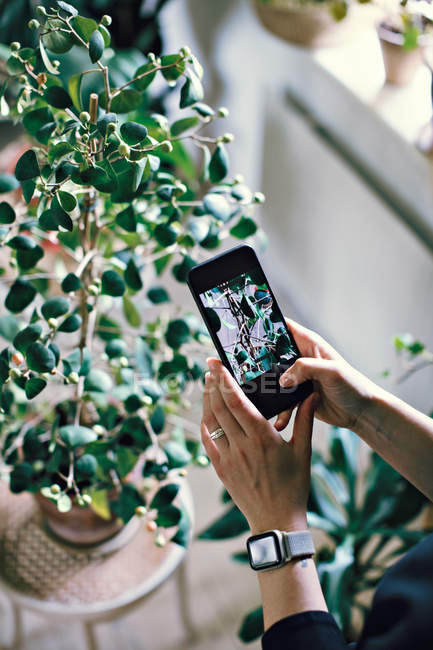 Cropped hands of woman photographing potted plant at home — Stock Photo