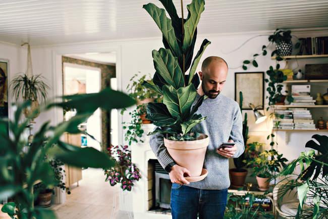 Homem que prende a planta potted quando mensagem de texto no telefone esperto em casa — Fotografia de Stock