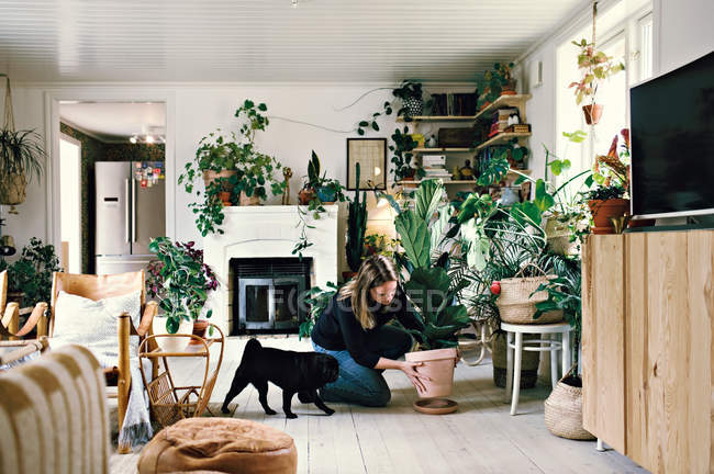 Full length of woman crouching by pug while positioning potted plant on plate in room at home — Stock Photo