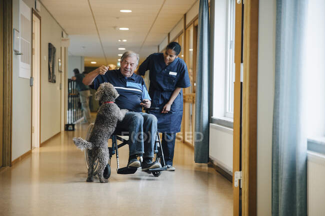 Full length of female nurse standing by disabled elderly man on wheelchair playing with dog in alley at retirement home — Stock Photo
