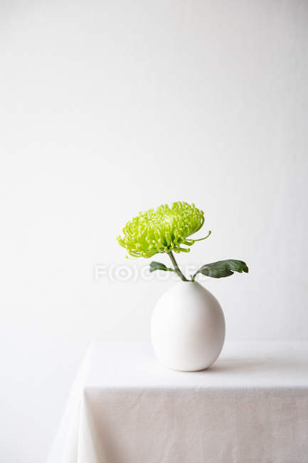 Chrysanthemum in a round ceramic vase on a white tablecloth — Stock Photo