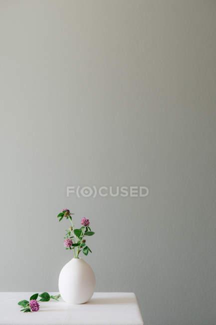 Eine florale Einstellung mit einer keramischen Vase gefüllt mit blühenden Klee auf einem weißen Tisch gegen eine gedämpfte graue Wand — Stockfoto