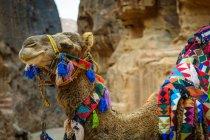 Giordania, Ma'an Gouvernement, Petra District, splendidamente decorato nel deserto roccioso — Foto stock