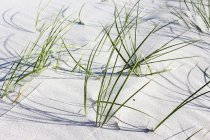 Australia, Tasmania, Denison Beach, grass on sandy beach — Stock Photo