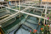 Indonesia, Sulawesi Utara, Kabupaten Minahasa, fish pool in lake Danau Tondano on Sulawesi Utara — Foto stock