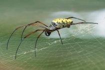 Indonesia, Java Barat, Kota Bogor, Spider in Botanical Garden, Kebun Raya Bogor, Botanical Garden — Stock Photo
