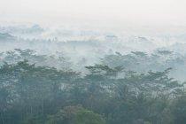 Indonesia, Java Tengah, Magelang, vista dal tempio, Tempio buddista, complesso del Tempio di Borobudur, veduta aerea foresta nebbiosa — Foto stock
