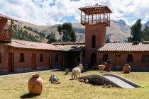 Перу, Пуно, від Куско, на озері Тітікака, альпаки на фермі, на фоні гори — стокове фото