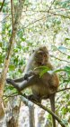 Monkey on the tree in the mangrove forest — Stock Photo