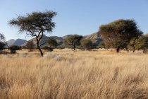Namibia, Okapuka Ranch, Safari, Game Drive, antilope Oryx — Foto stock