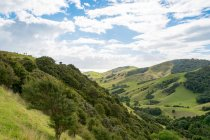 New Zealand, Waikato, Kereta, Green hillsides in New Zealand with forest — Stock Photo
