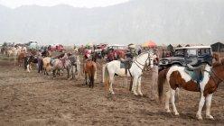Indonesien, Jawa Timur, Probolinggo, Pferde für den Transport am Mt. Bromo — Stockfoto