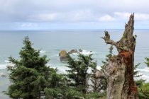 USA, Oregon, Arch Cape, trees on the coast by Highway 101 — Stock Photo
