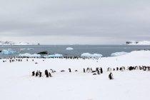Antarctica, penguins in Antarctica — Stock Photo