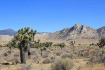 Estados Unidos, California, Condado de Inyo, Vista del camino a Death Valley - foto de stock