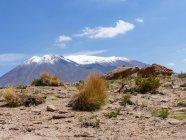 Болівія, департамент Потосі, ні Лопес провінції, трав і порід перед засніжені гори — стокове фото