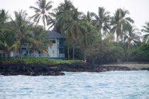 USA, Hawaii, Captain Cook, house between palm trees on Kohala — Stock Photo