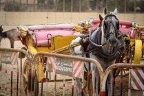 Egypt, Giza Gouvernement, Giza, panier de Horse-Drawn près de clôture — Photo de stock