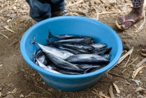 Cape Verde, Sao Miguel, fresh fish in country. — Stock Photo