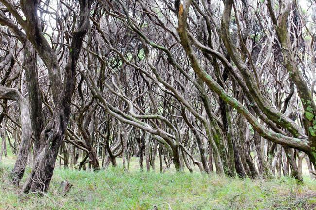 Нової Зеландії, Південного острова, Тасман, Puponga, похід на прощання коси, мальовничим лісом подання — стокове фото