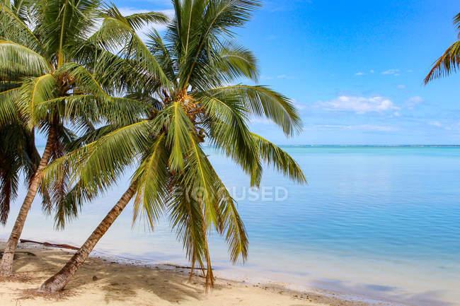 Isole Cook, Aitutaki, vista panoramica della spiaggia vuota — Foto stock