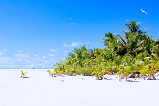 Kochinseln, Aitutaki, Hochzeitsinsel, Lagunentour, weißer Sandstrand und Meerblick — Stockfoto