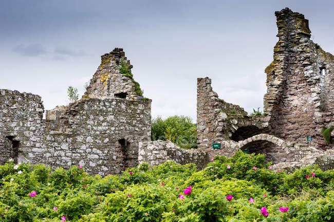 Regno Unito, Scozia, Aberdeenshire, Stonehaven, Dunnottar Rovine del castello in verdi cespugli fioriti — Foto stock