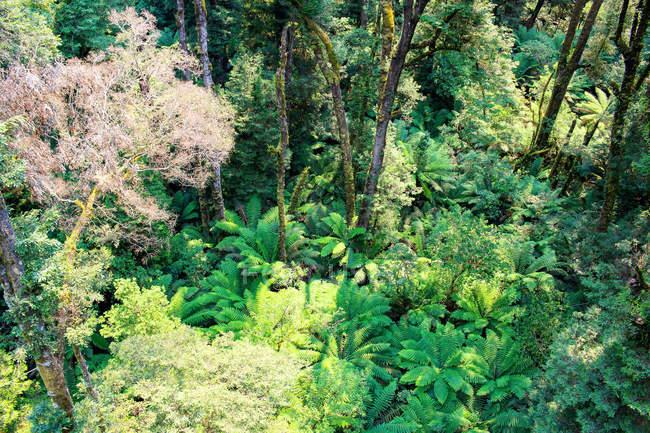 Australie, Great Ocean Road, Otway Fly Treetop — Photo de stock